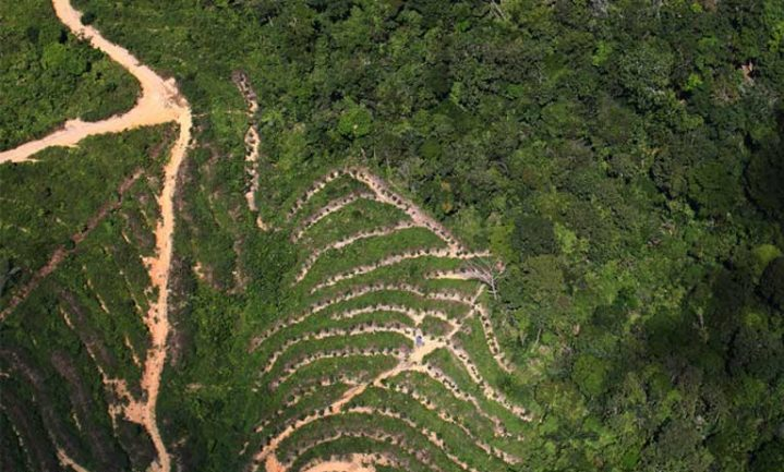 Palm oil destroys the biodiversity of rainforests and is killing hundreds of endangered species