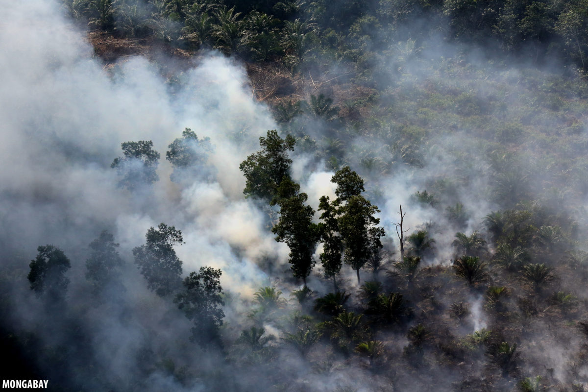 A fire in an Indonesian forest