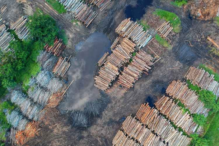 Logging activities and deforestation for palm oil are a major cause of species extinction throughout the world