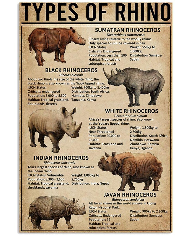 Types of Rhinos throughout the world
