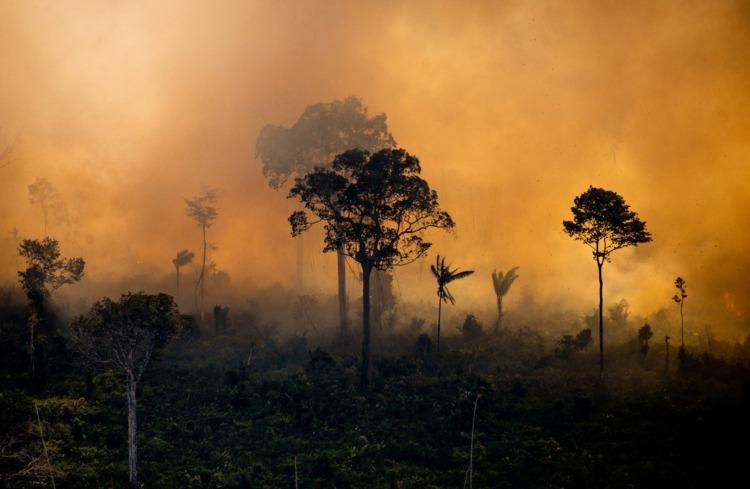 Palm Oil Problem #2 Palm Oil is destroying rainforests