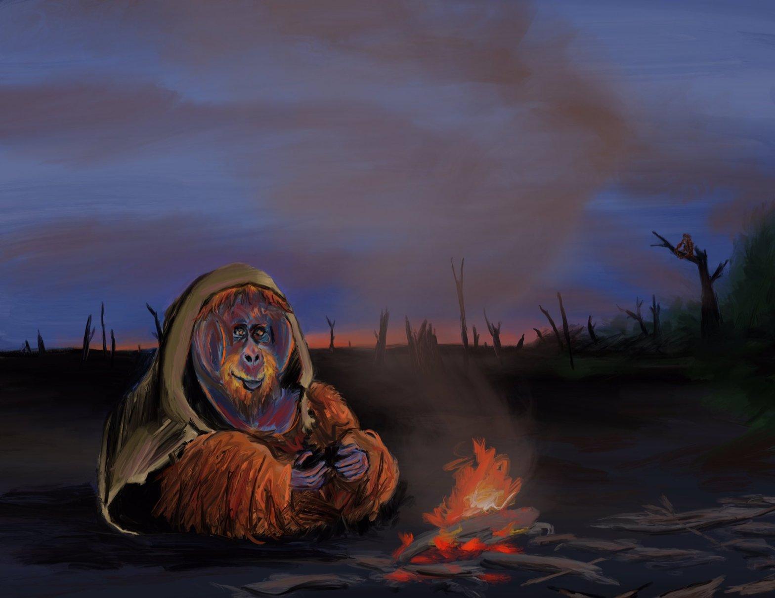 Bornean Orangutan by Oscar Frederick Welsh @of_welsh