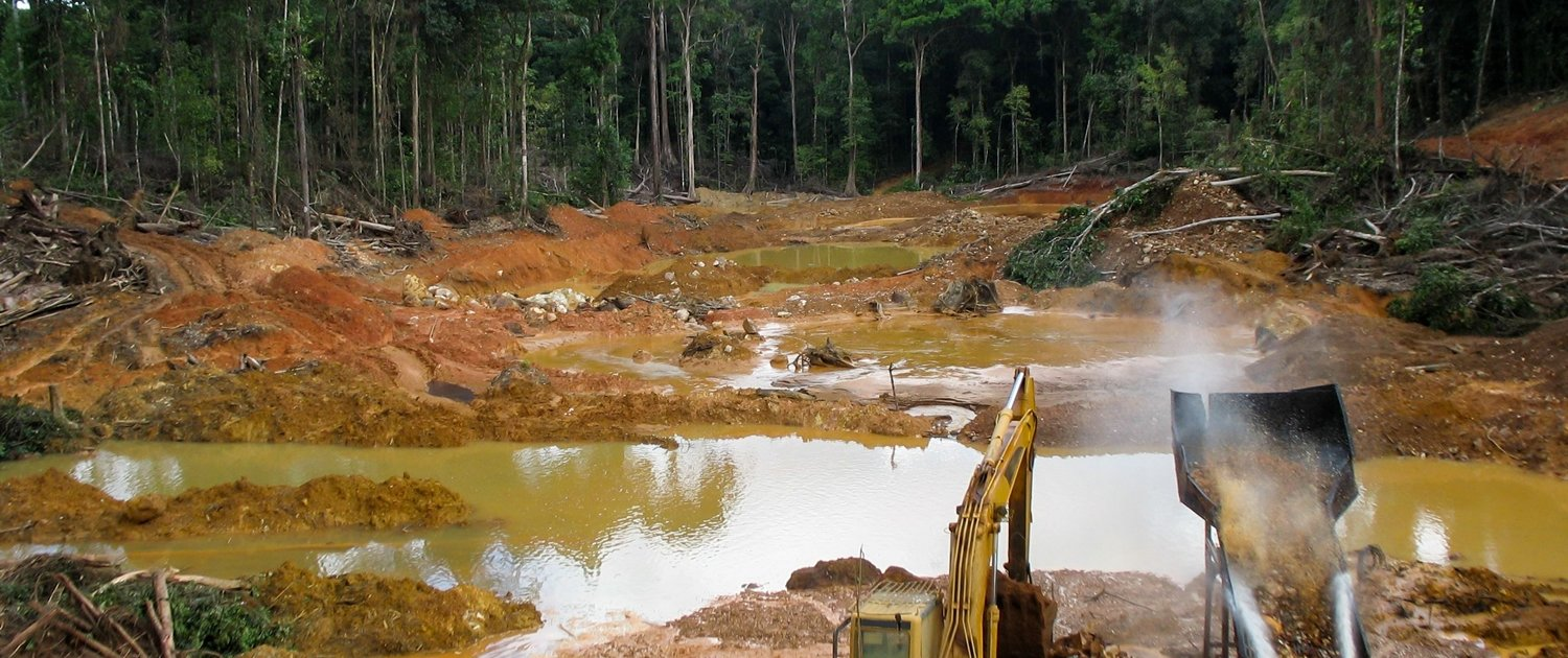 Deforestation in the Amazon to make way for palm oil