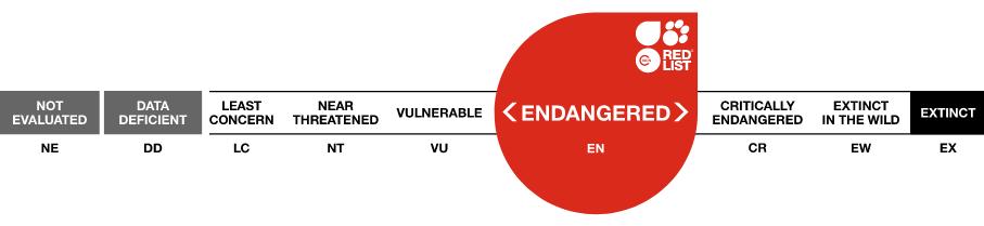 ICUN endangered logo