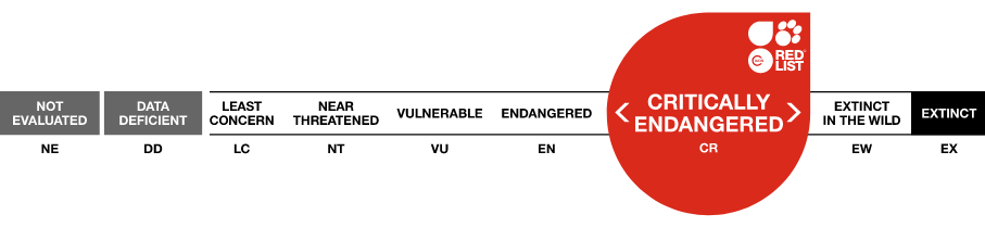 iucn-rating-critically-endangered