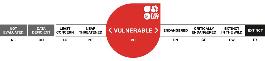 IUCN Status Vulnerable