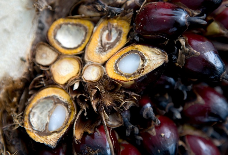 Close up - palm oil