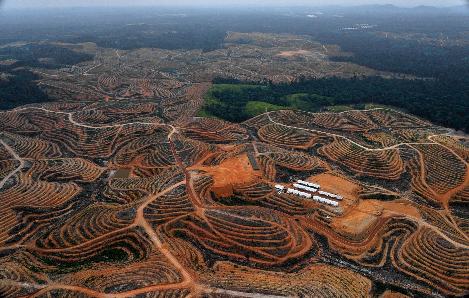 borneo-deforestation-palm-oil-2