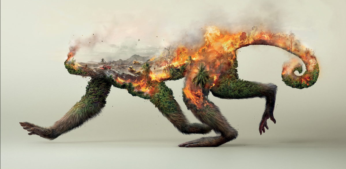 Brands Using Deforestation Palm Oil in their Products