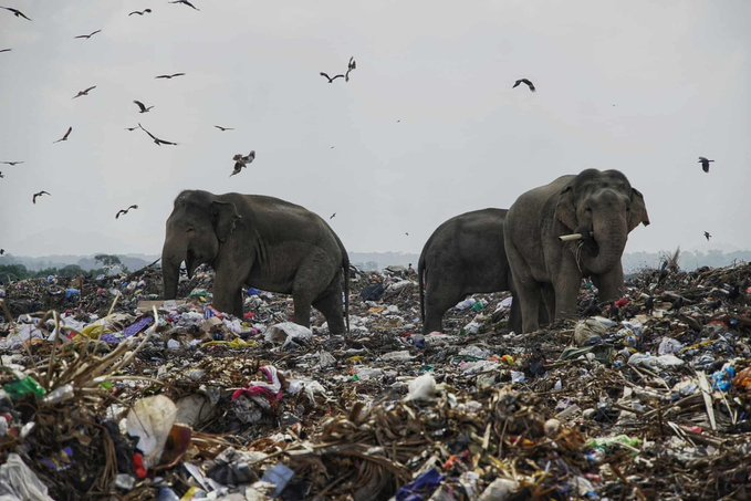 Where There's Smoke There's Fire: Let's Sort the Plastic Menace