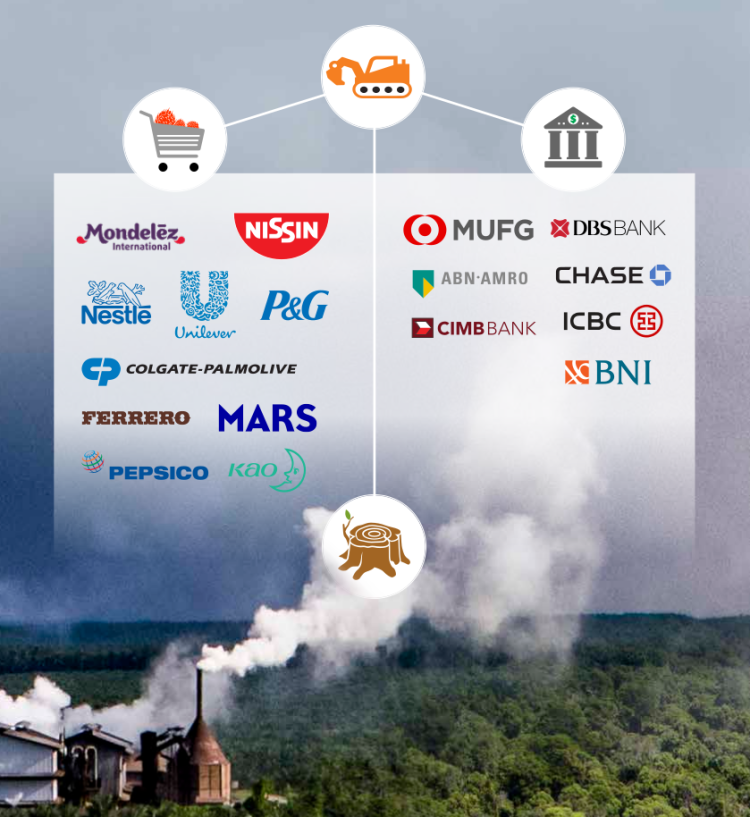 Rainforest Action Network: Keep Forest Standing: Exposing Brands and Banks Driving Deforestation