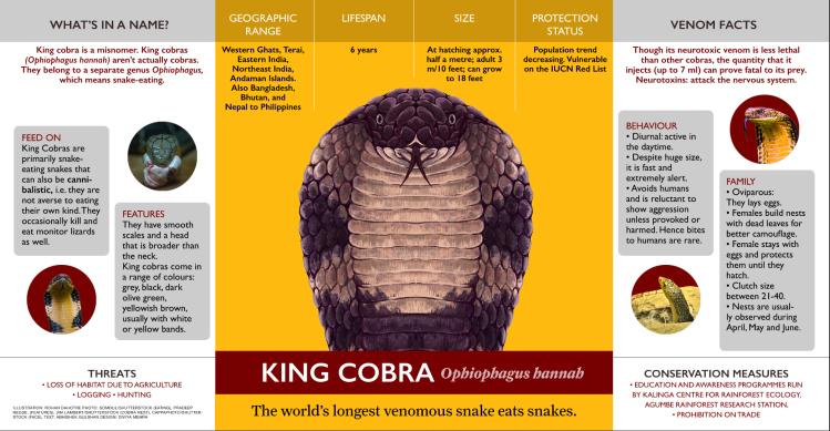 king cobra infographic