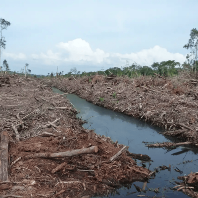 peat-swamp-cleared-for-palm-oil-in-malaysia