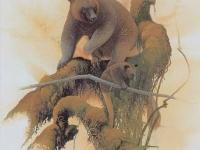 Seri's Tree Kangaroo Dendrolagus stellarum