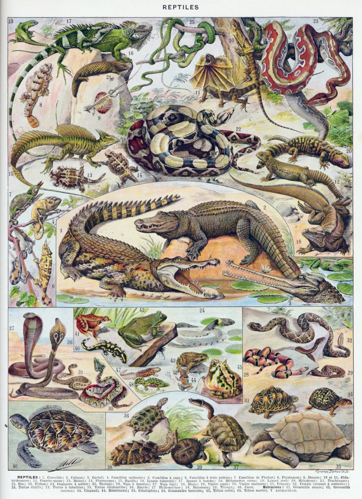 One-fifth of reptiles heading towards extinction
