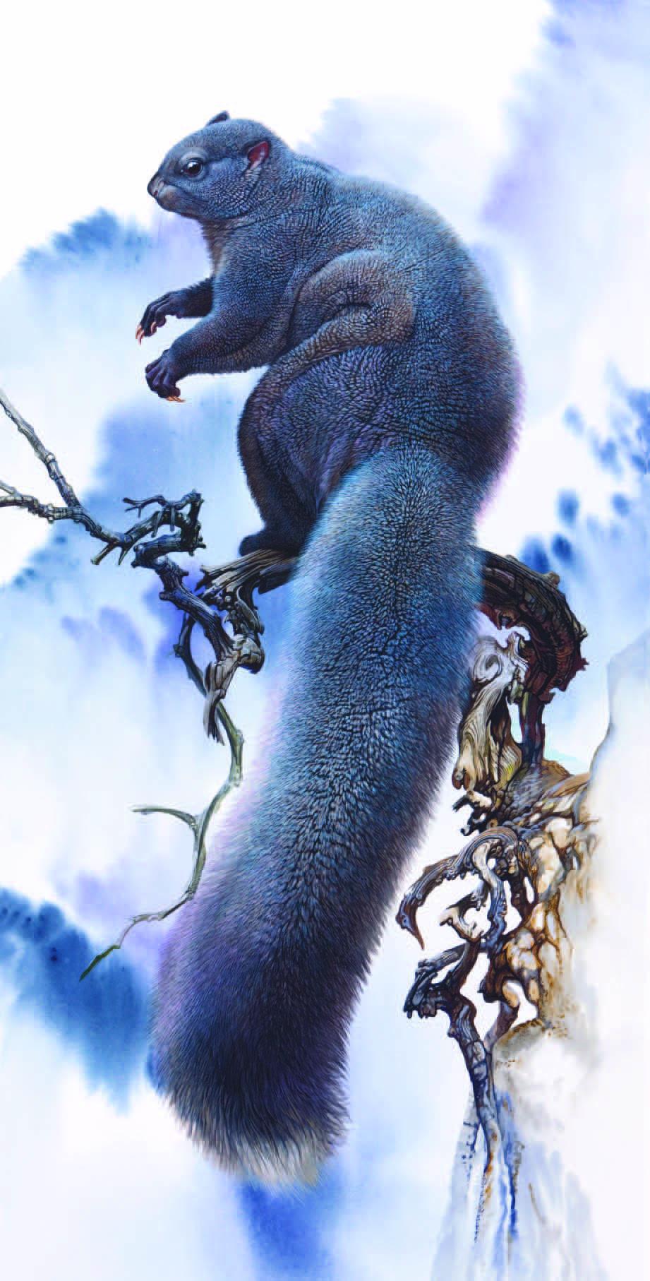 Woolly Flying Squirrel Eupetaurus cinereus