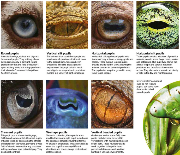 Inside the colourful world of animal vision