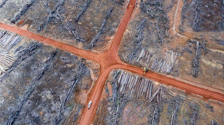 deforestation caused by palm oil