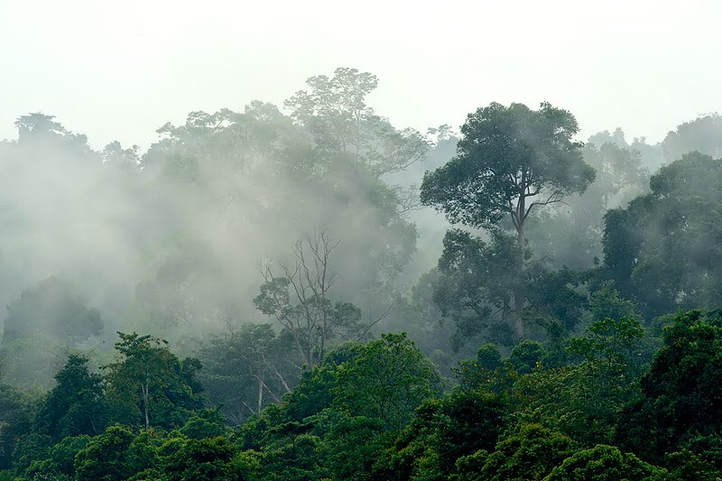 Craig Jones Wildlife Photography - Sumatran virgin rainforests