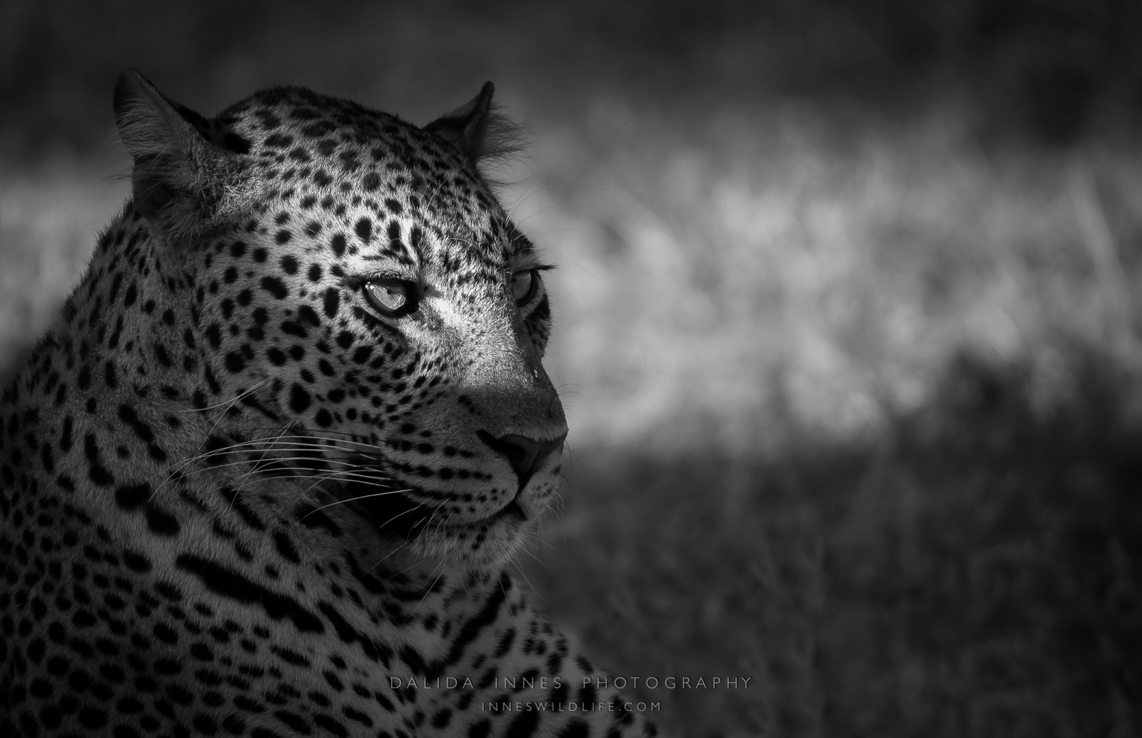 Beyond the Light by Dalida Innes Wildlife Photography