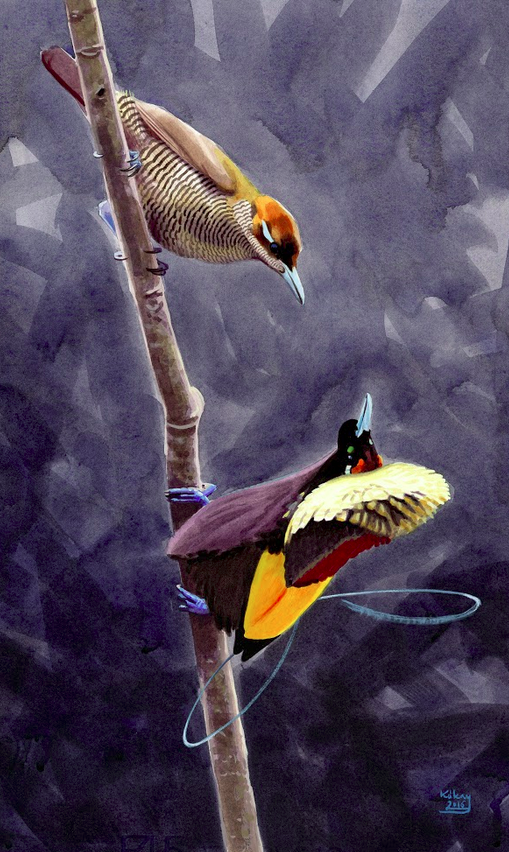 Magnificent Bird of Paradise Pair by Szabolcs Kókay