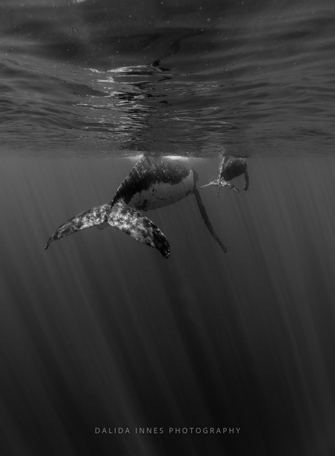 On Their Way by Dalida Innes Wildlife Photography whale