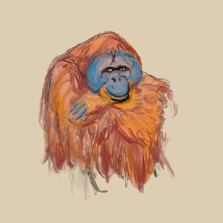 Orangutan drawing by Oscar Frederick Welsh