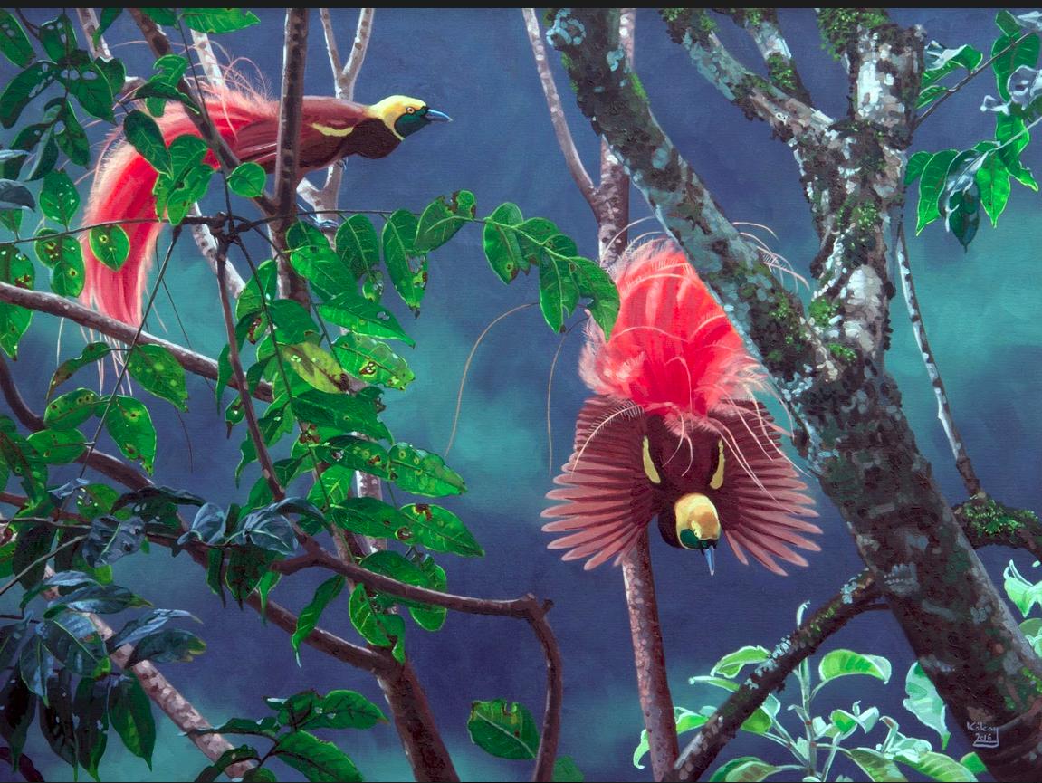 Reggiana Bird of Paradise by Szabolcs Kókay