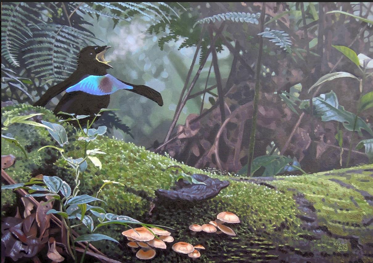 Vogelkop Superb Bird of Paradise by Szabolcs Kókay
