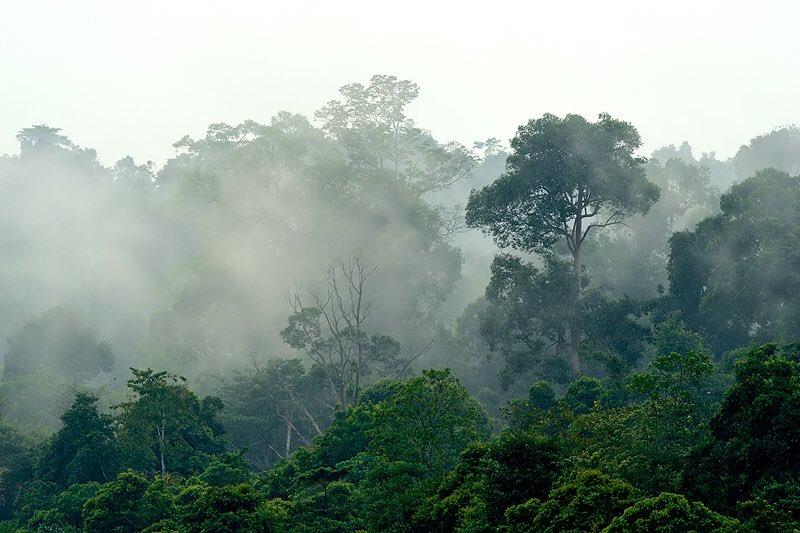 Rainforest by Craig Jones