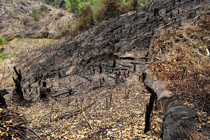 Deforestation - Craig Jones Wildlife Photography