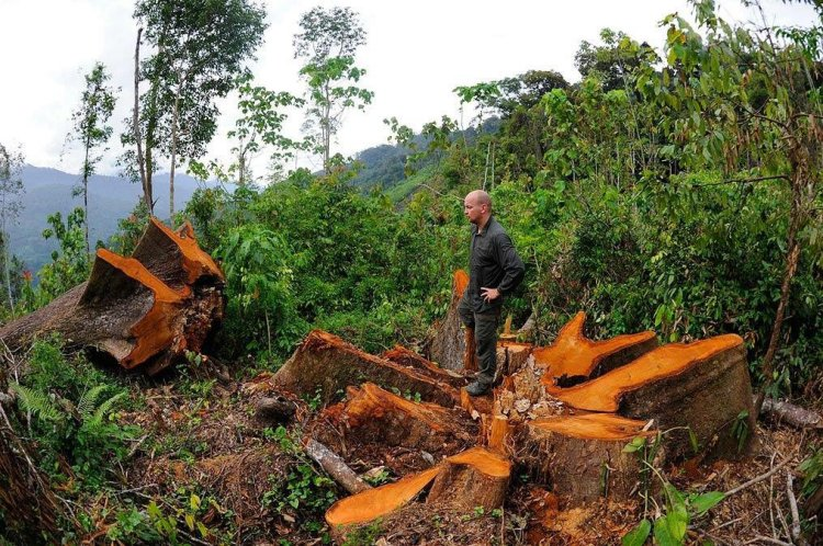 Protected forests in Sumatra are being destroyed and all of the animals along with them. Craig Jones Wildlife Photography