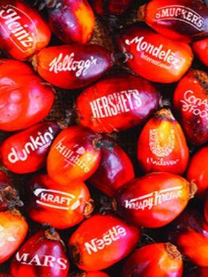 Brands using deforestation palm oil