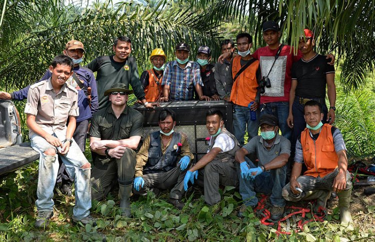 The courageous team from HOCRU who rescue orangutans daily from RSPO palm oil plantations and illegally destroyed forests in Sumatra. Craig Jones Wildlife Photography