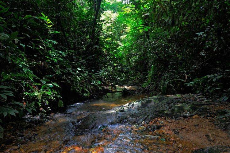Craig Jones Wildlife Photography - Virgin and untouched rainforest in Sumatra