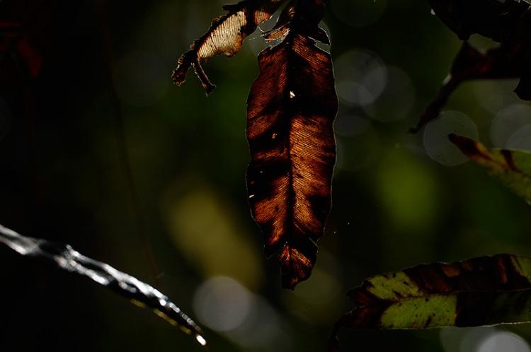 Craig Jones Wildlife Photography. A female orangutan at dawn in Sumatra