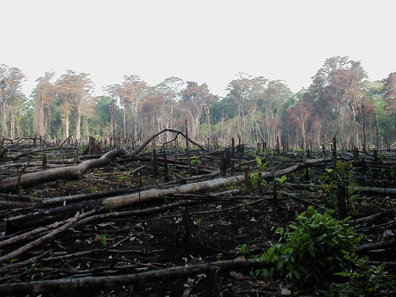 Deforestation in the Democratic Republic of Congo. Photo: Wikipedia.