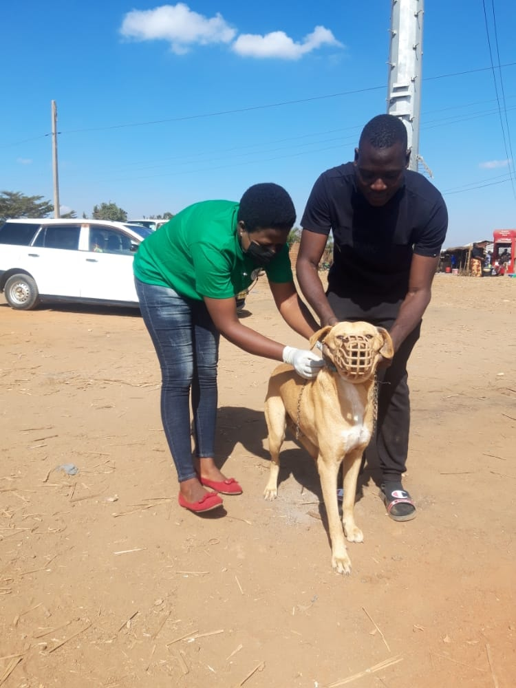A dog getting a rabies vaccination - Dr Richard Ssuna