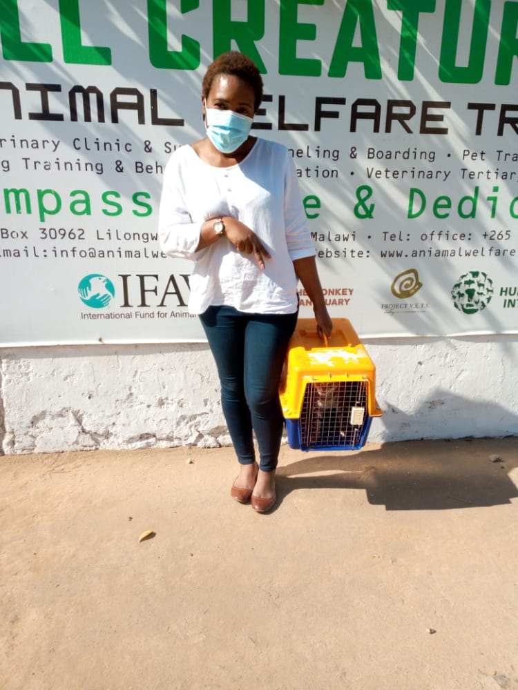 Helping to vaccinate dogs against rabies