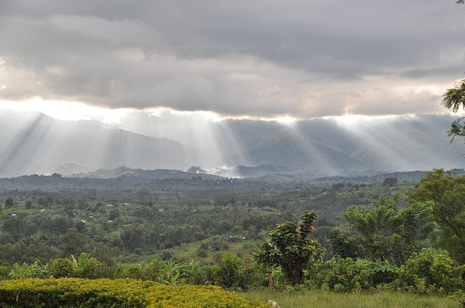 virgin forest in Uganda https://www.pxfuel.com/en/free-photo-xfzml