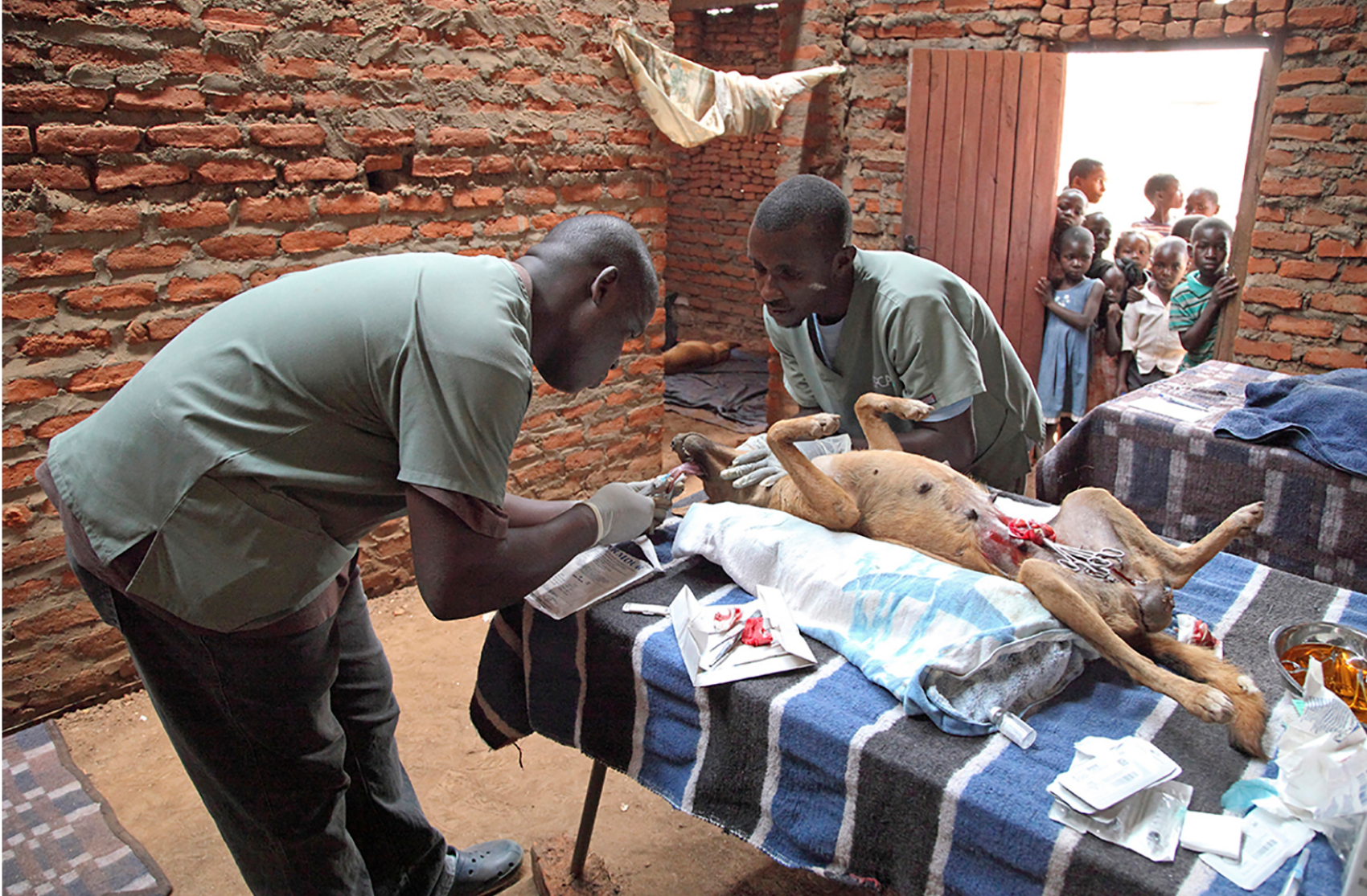 Dr Ssuna and an assistant help to save a dog in Lilongwe. Used with permission from Joseph Murphy https://www.josephmurphyphotography.com/new-page-3