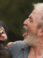 Dr George McGavin joking with a bonobo while filming Monkey Planet for the BBC